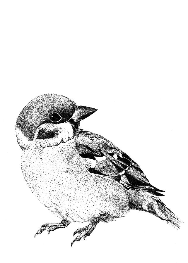 how to draw a sparrow how to draw a sparrow sparrow how draw a to