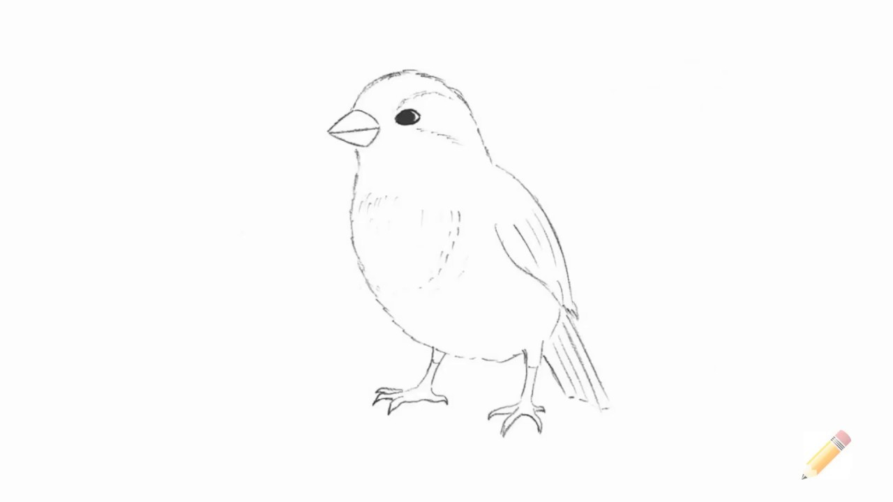 how to draw a sparrow how to draw worksheets for the young artist how to draw a a to how draw sparrow
