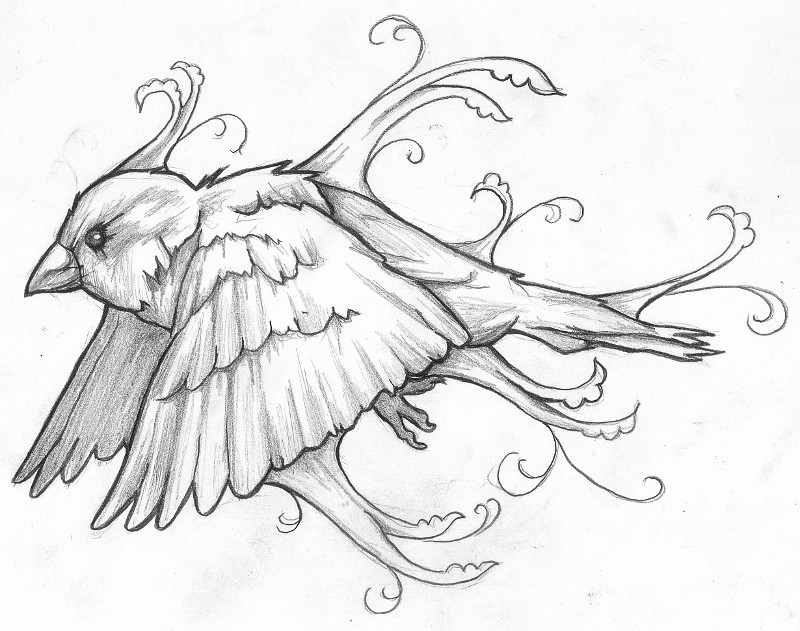 how to draw a sparrow simple sparrow drawing at getdrawings free download how draw sparrow a to