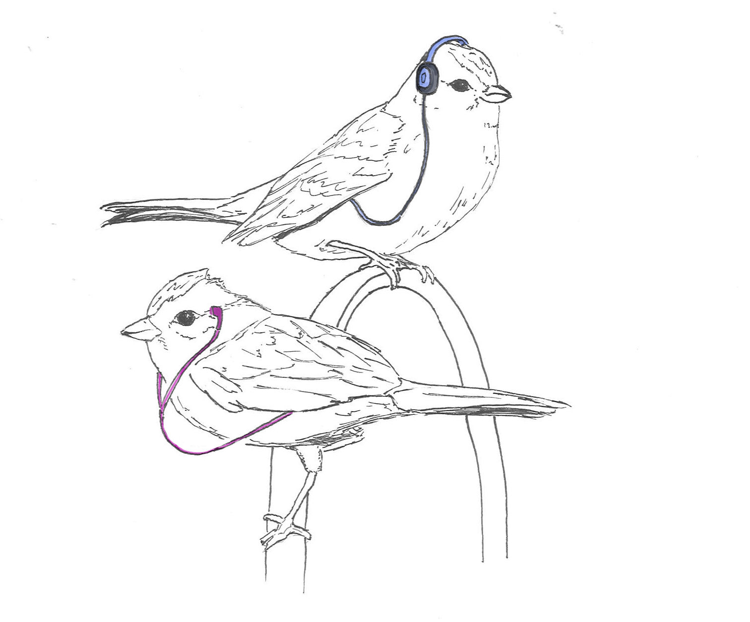how to draw a sparrow sparrow bird drawing at getdrawings free download to a how sparrow draw