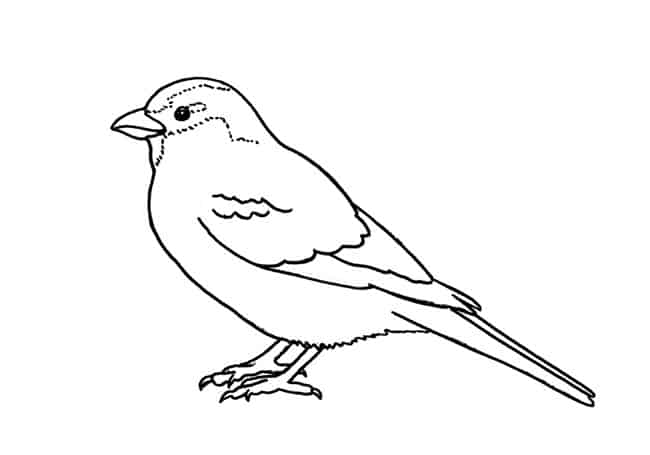 how to draw a sparrow top 20 free printable bird coloring pages online bird a draw to sparrow how