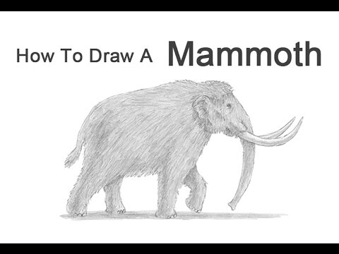 how to draw a woolly mammoth step by step how to draw a woolly mammoth extinct animals step by a step to step draw woolly how mammoth by