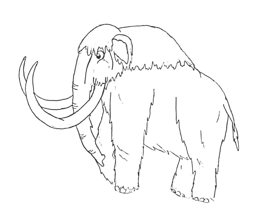 how to draw a woolly mammoth step by step items similar to original woolly mammoth drawing on etsy woolly how step a draw mammoth step to by