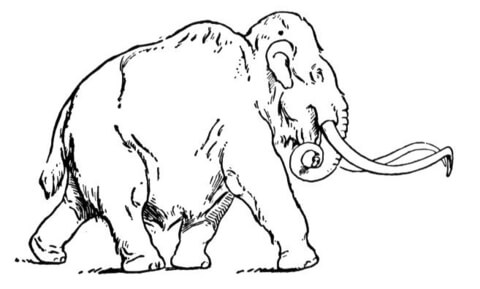 how to draw a woolly mammoth step by step woolly mammoth drawing at getdrawings free download a how draw to woolly by mammoth step step