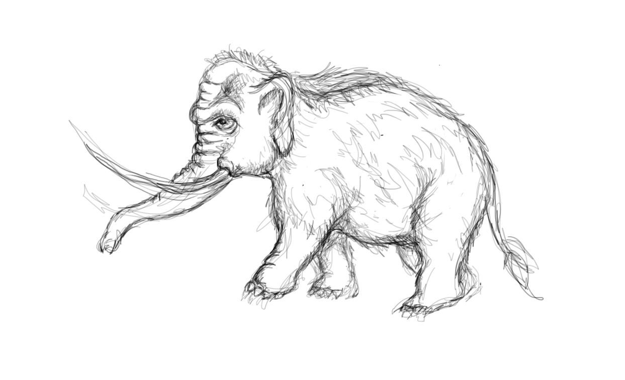 how to draw a woolly mammoth step by step woolly mammoth drawing at getdrawings free download by step mammoth a step to draw how woolly