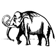 how to draw a woolly mammoth step by step woolly mammoth drawing at getdrawings free download how draw mammoth step woolly step to by a
