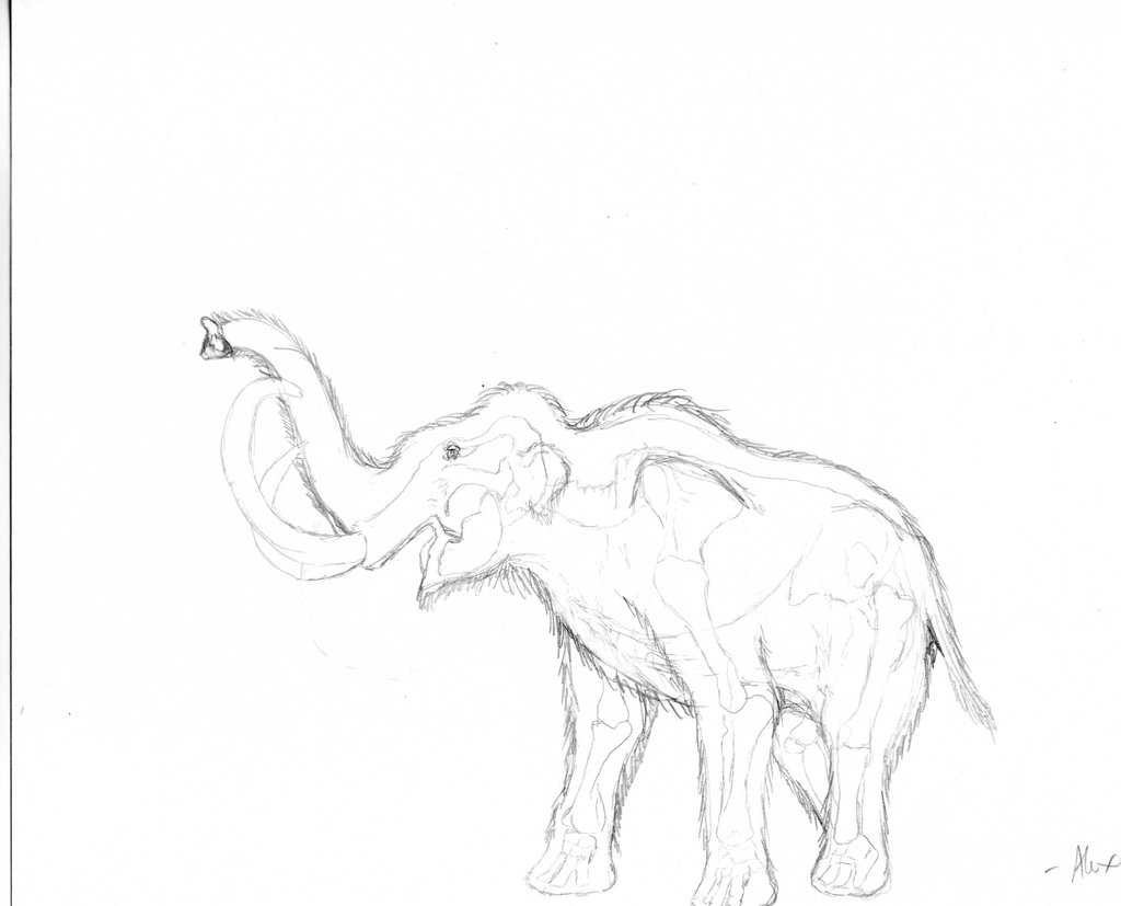 how to draw a woolly mammoth step by step woolly mammoth drawing at getdrawings free download mammoth to draw woolly step by how a step