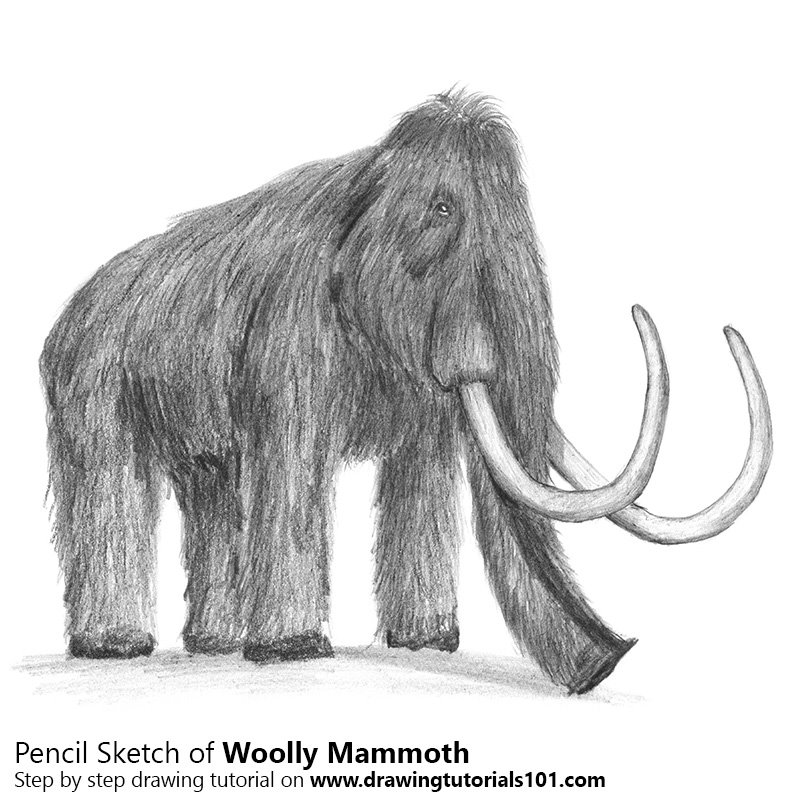 how to draw a woolly mammoth step by step woolly mammoth drawing at getdrawings free download woolly how step a mammoth draw to by step