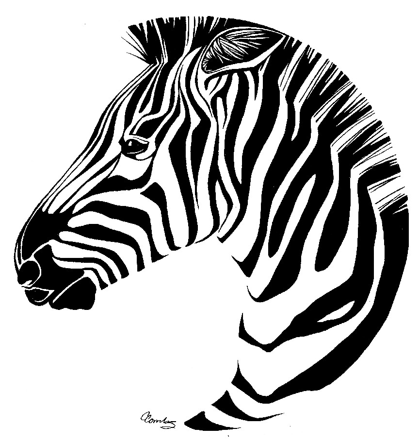 how to draw a zebra head penink clipart best clipart best head zebra draw to how a