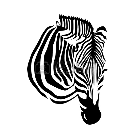 how to draw a zebra head zebra head drawing at getdrawings free download draw head a to zebra how