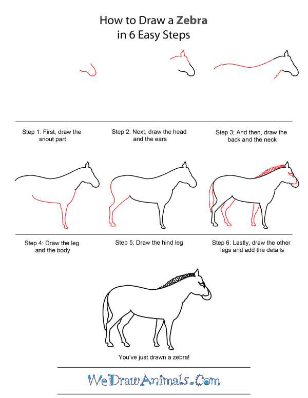 how to draw a zebra step by step 1000 images about color pages of different things and draw step zebra how by step a to