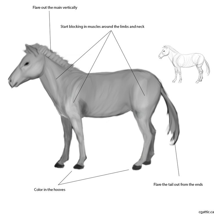 how to draw a zebra step by step how to draw a zebra in 4 steps with photoshop zebra step zebra step draw a to by how