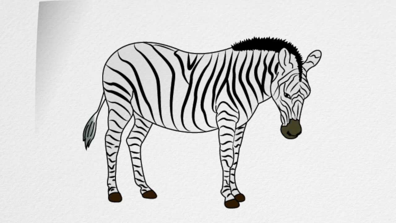 how to draw a zebra step by step how to draw a zebra with images drawings art class zebra step to draw step a how by