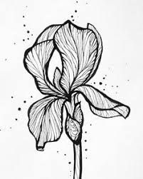 how to draw an iris iris line drawing at paintingvalleycom explore how an draw iris to