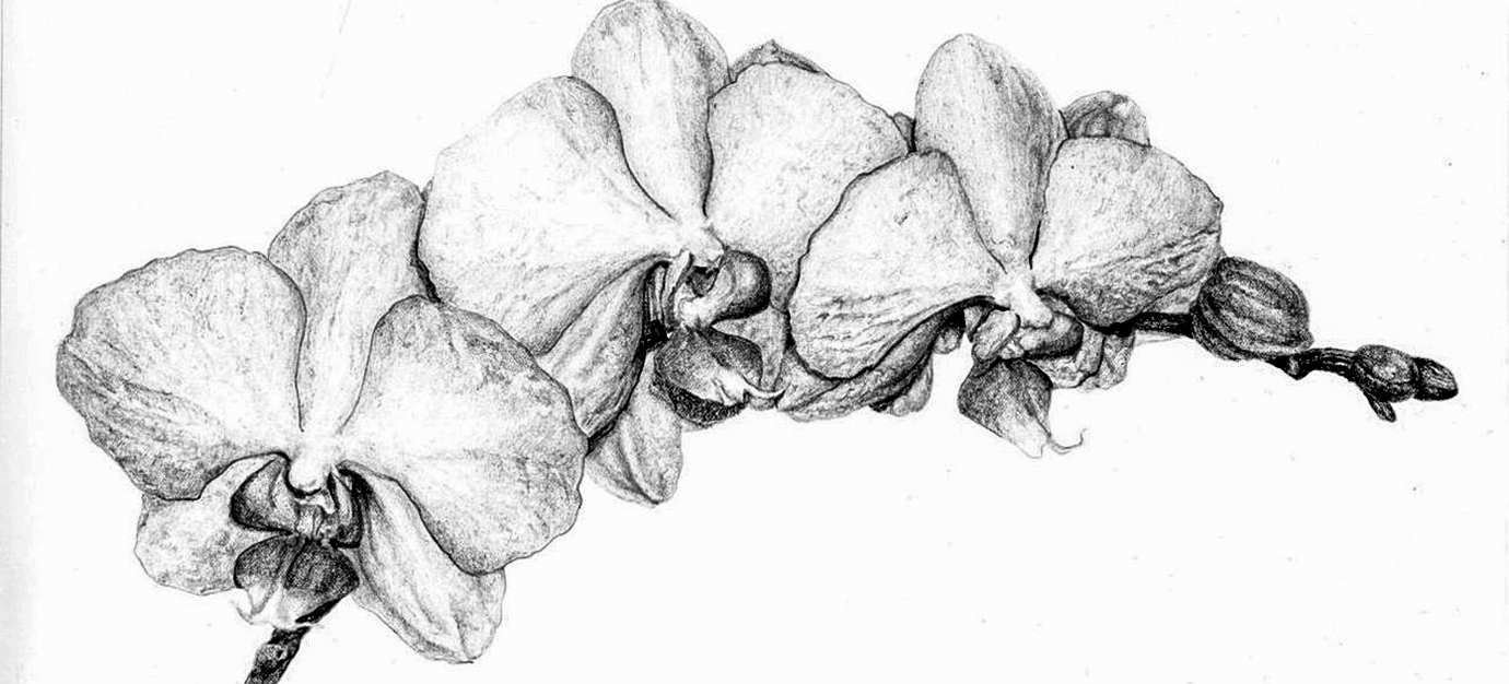 how to draw an orchid flower 17 hand drawn easy orchid flower drawing images orchid flower an how draw to