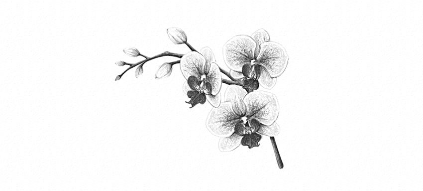 how to draw an orchid flower amaryllis flower drawing best flower site draw an to orchid flower how