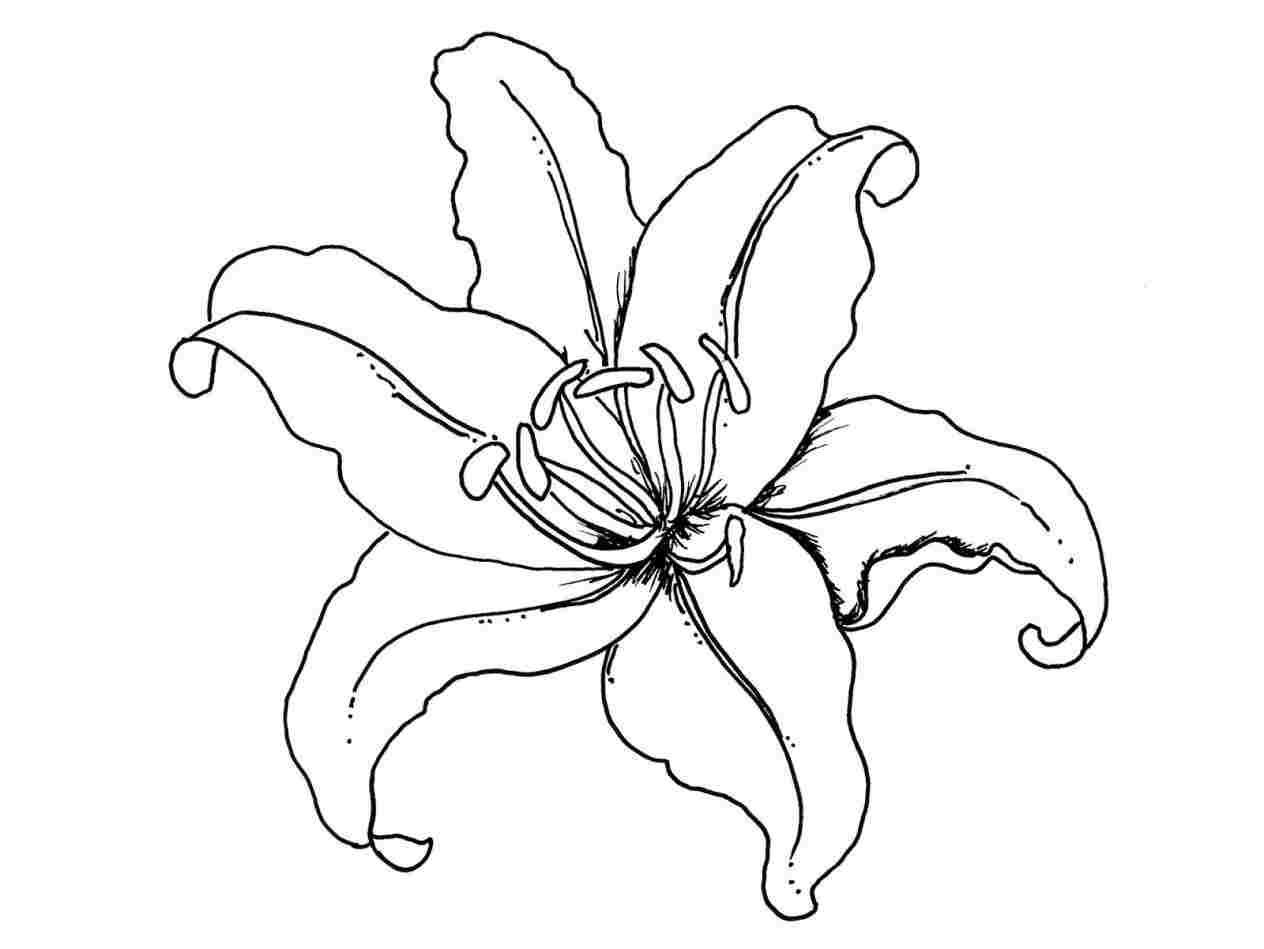 how to draw an orchid flower beautiful orchids drawings fine art america how to an draw orchid flower