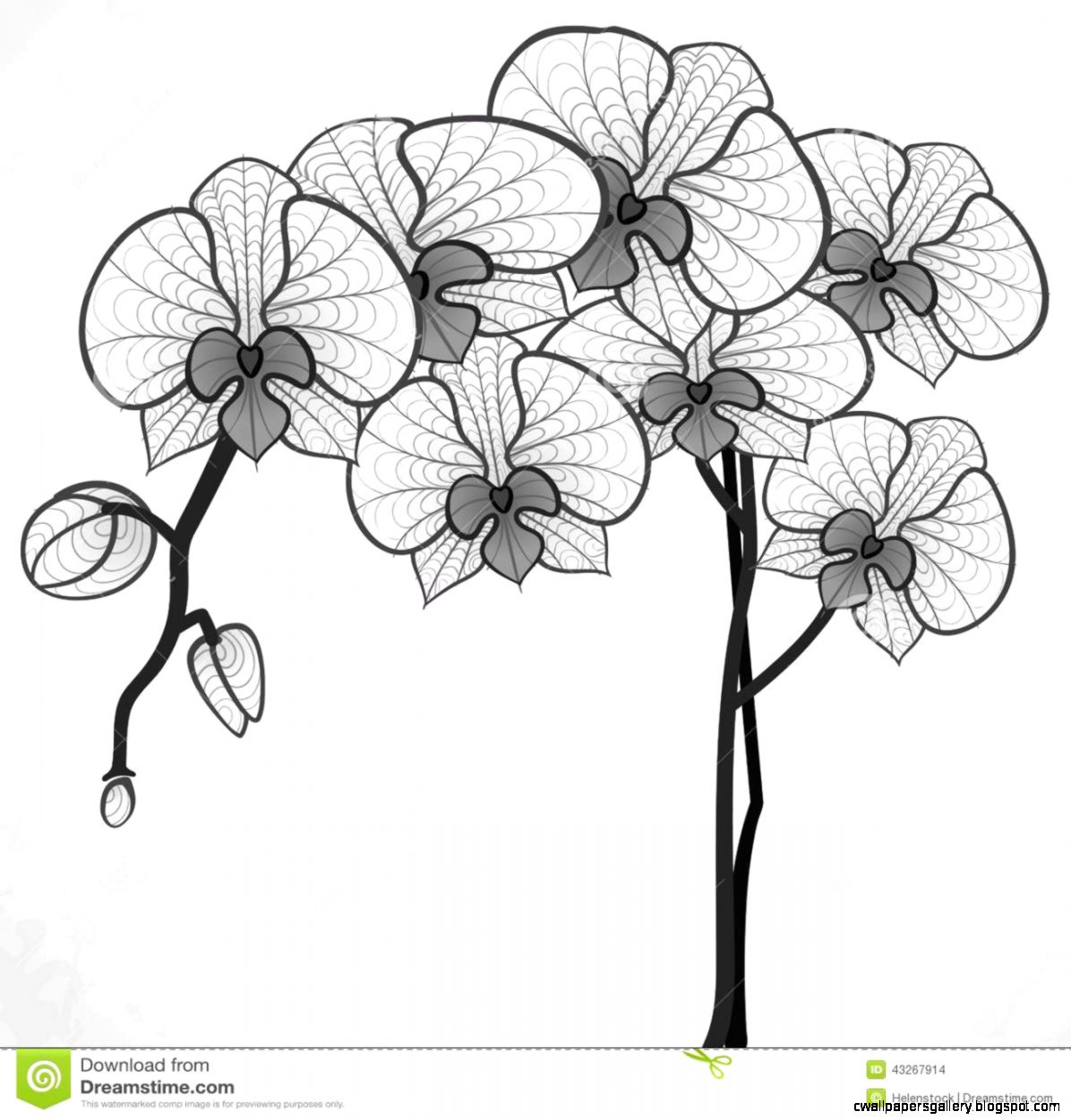 how to draw an orchid flower black orchid flower drawing wallpapers gallery orchid an flower to how draw