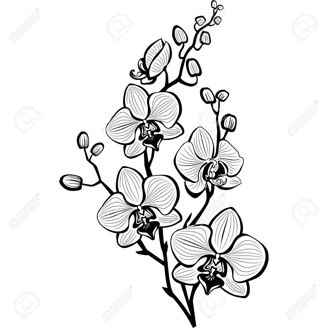 how to draw an orchid flower drawing printout how to draw an orchid draw an to flower orchid how