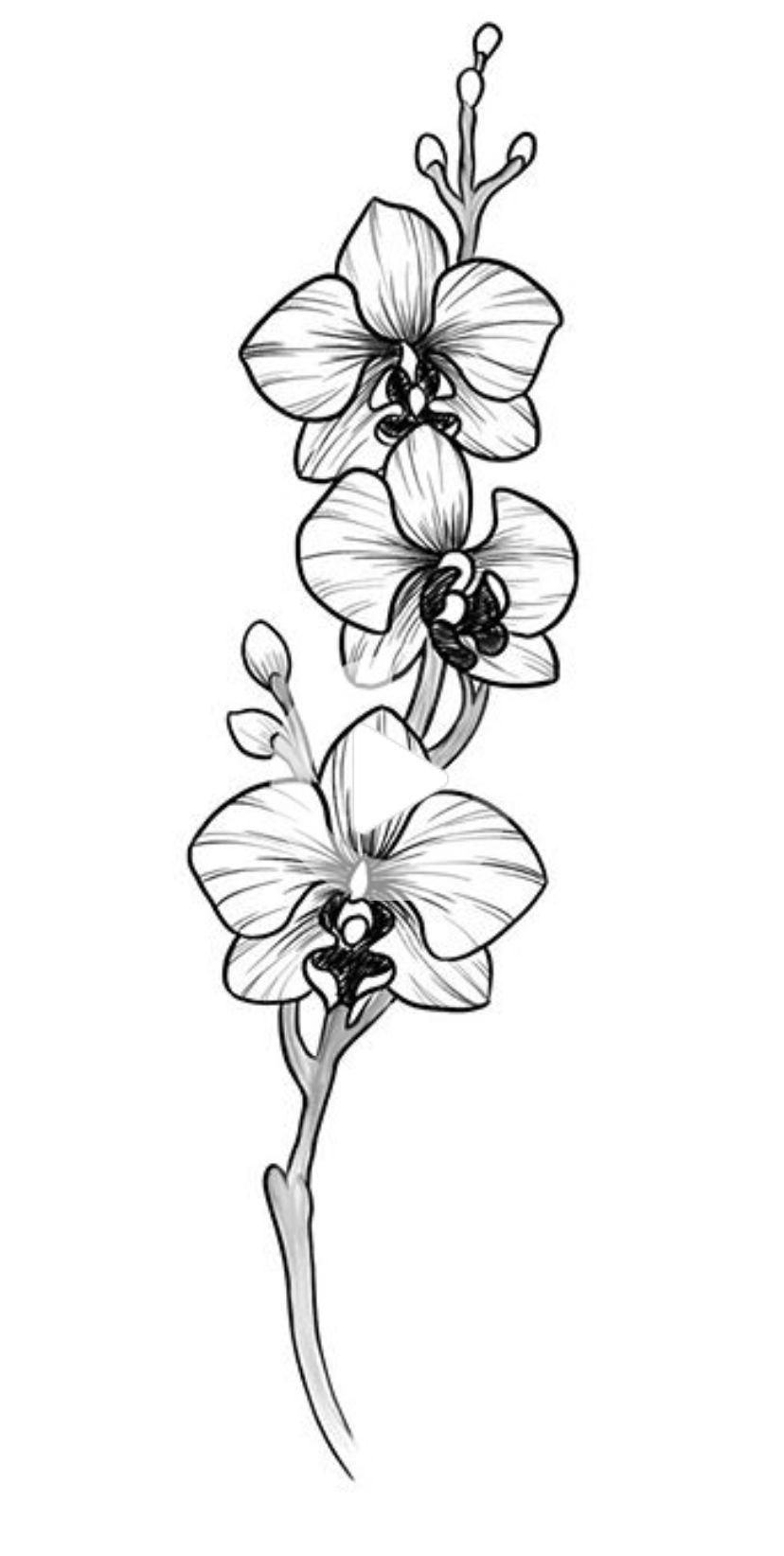 how to draw an orchid flower flowers drawings inspiration orchid sketches orchid by to how draw an flower orchid