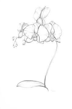 how to draw an orchid flower hand drawing orchid flower canvas print pixers we flower to how orchid draw an