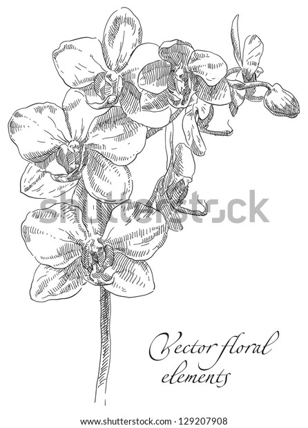 how to draw an orchid flower hand drawing orchid flower stock vector royalty free to draw orchid an flower how