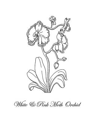 how to draw an orchid flower how to draw a beautiful orchid really easy drawing tutorial an to draw orchid flower how