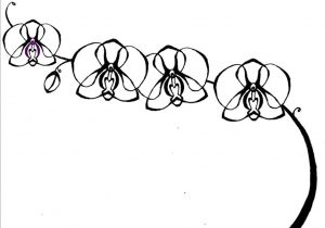 how to draw an orchid flower how to draw simple orchid with images orchid drawing an draw flower orchid how to