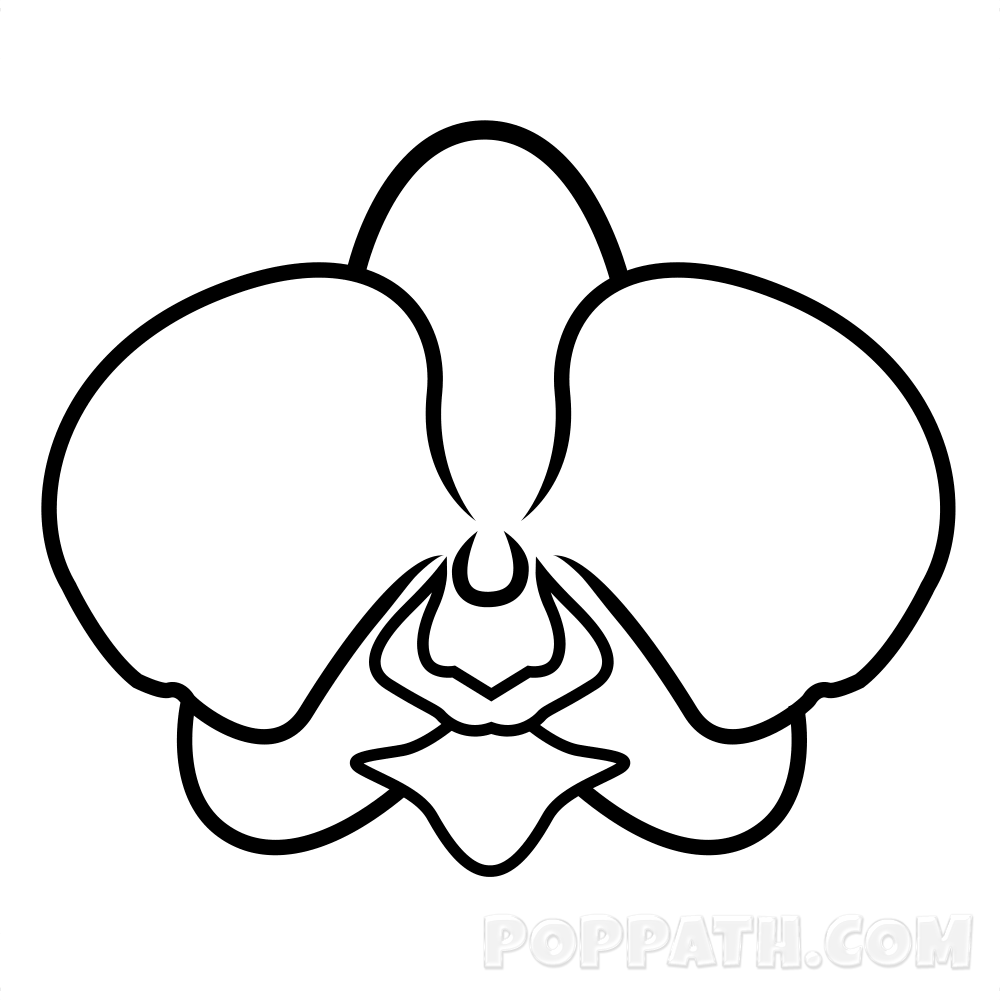 how to draw an orchid flower images of flowers to draw with pencil coloring pages for an how to flower draw orchid