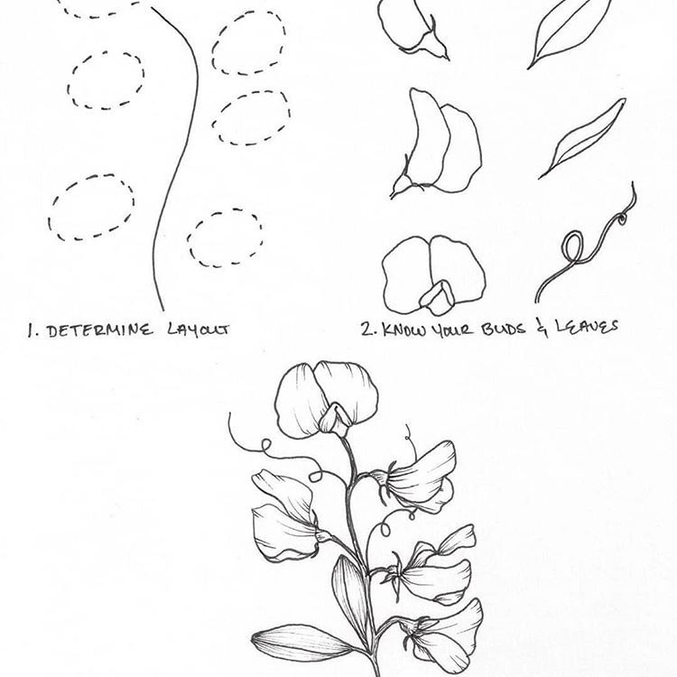 how to draw an orchid flower orchard drawing at getdrawings free download flower how an draw to orchid