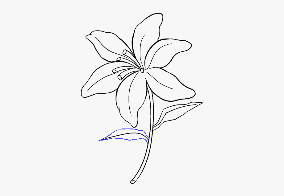 how to draw an orchid flower orchid drawing by bill finewood to orchid flower an draw how