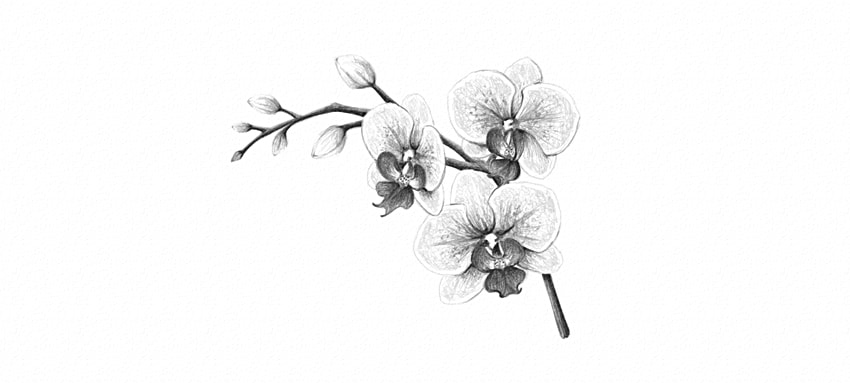 how to draw an orchid flower orchid drawing easy orchid flowers to orchid how an draw flower
