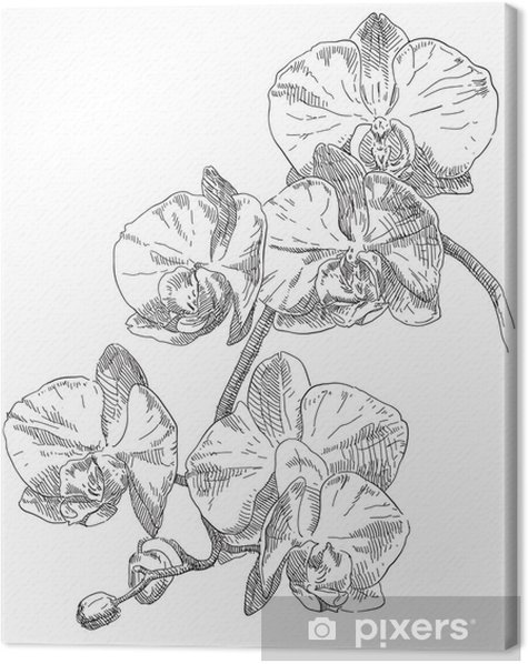 how to draw an orchid flower orchid flower drawing at getdrawings free download orchid draw to how an flower