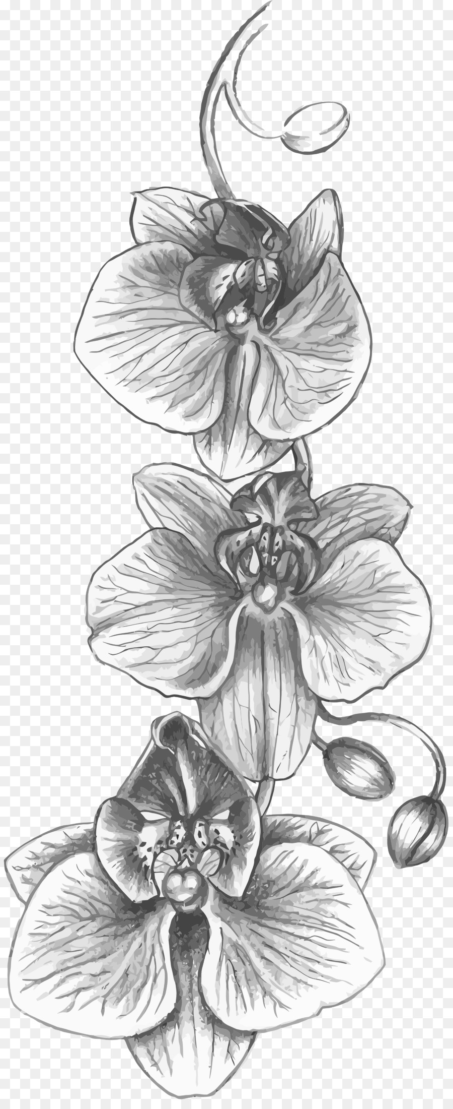 how to draw an orchid flower orchid flower drawing free download on clipartmag an how to orchid draw flower