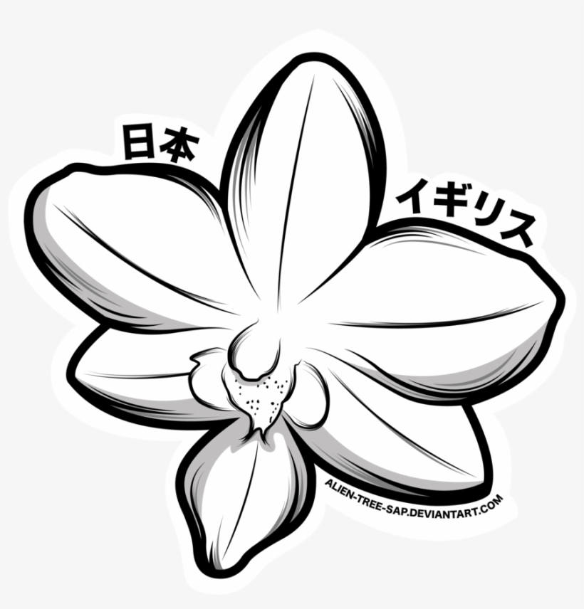 how to draw an orchid flower orchid flower drawing free download on clipartmag flower to orchid draw how an