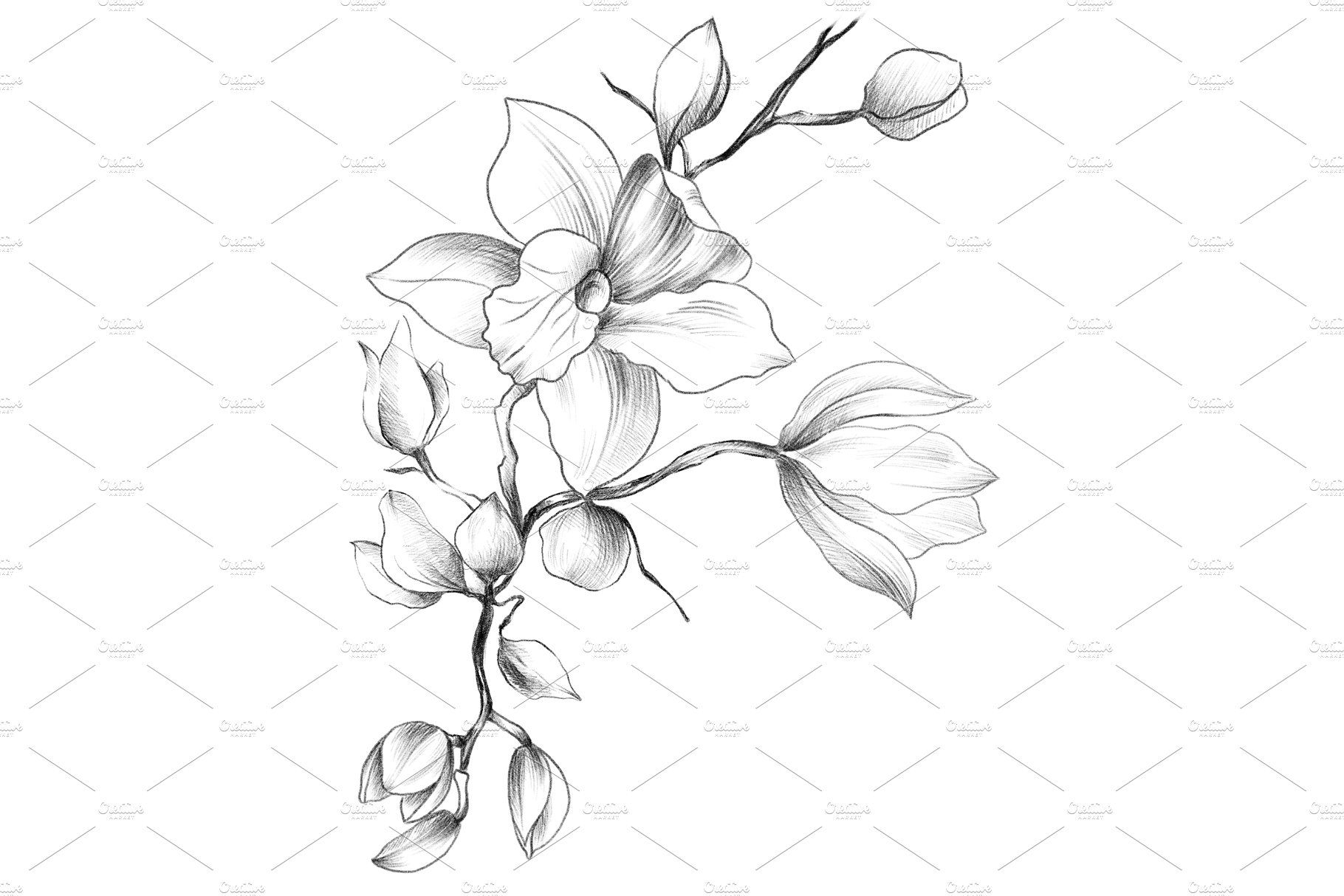 how to draw an orchid flower orchid flower drawing in pencil at paintingvalleycom to orchid flower how an draw