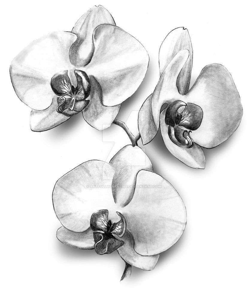 how to draw an orchid flower pin by megan kauffman on tats orchid drawing flower orchid draw flower how to an