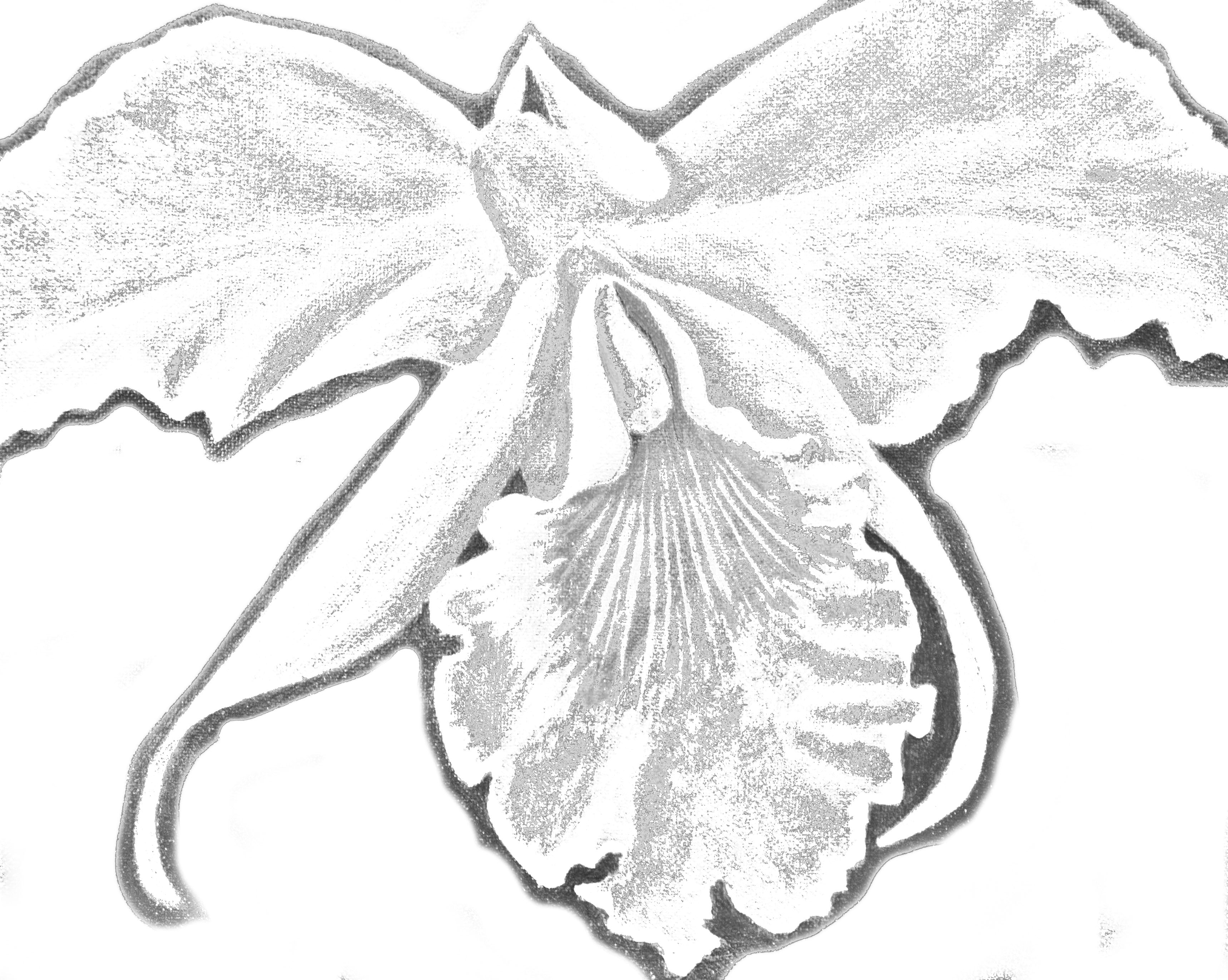 how to draw an orchid flower reference photo and traceable for how to paint an orchid orchid flower an draw to how