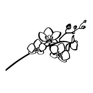 how to draw an orchid flower simple outline orchid drawing orchid flowers to orchid an draw flower how