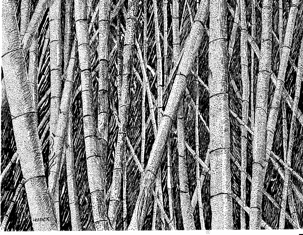 how to draw bamboo bamboo forest drawing by barney hedrick how draw bamboo to