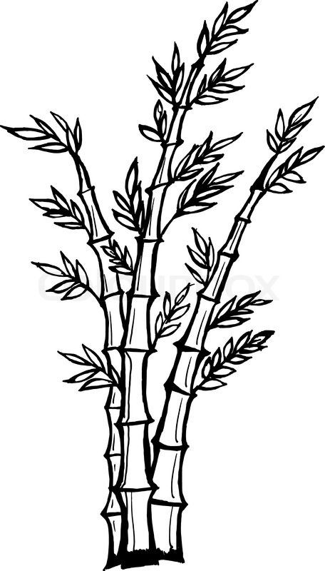 how to draw bamboo bamboo tree drawing at getdrawings free download how to draw bamboo