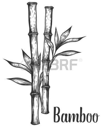 how to draw bamboo how to draw a bamboo plant step by step trees pop how to bamboo draw