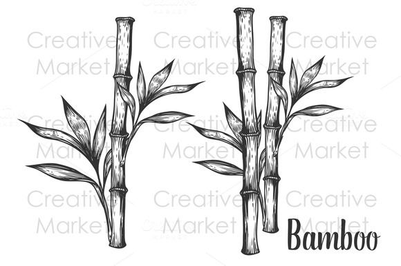 how to draw bamboo the best free bamboo drawing images download from 505 to how bamboo draw