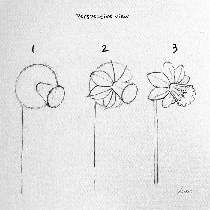how to draw flowers 45 beautiful flower drawings and realistic color pencil draw how flowers to