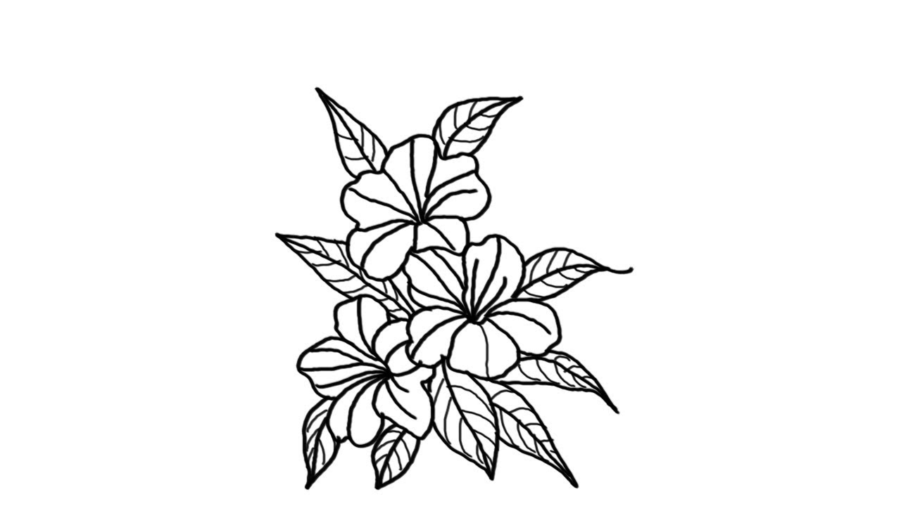 how to draw flowers how to draw a beautiful flower bunch youtube draw to how flowers