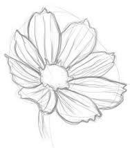 how to draw flowers image result for cosmos flower drawings drawings flower flowers to draw how