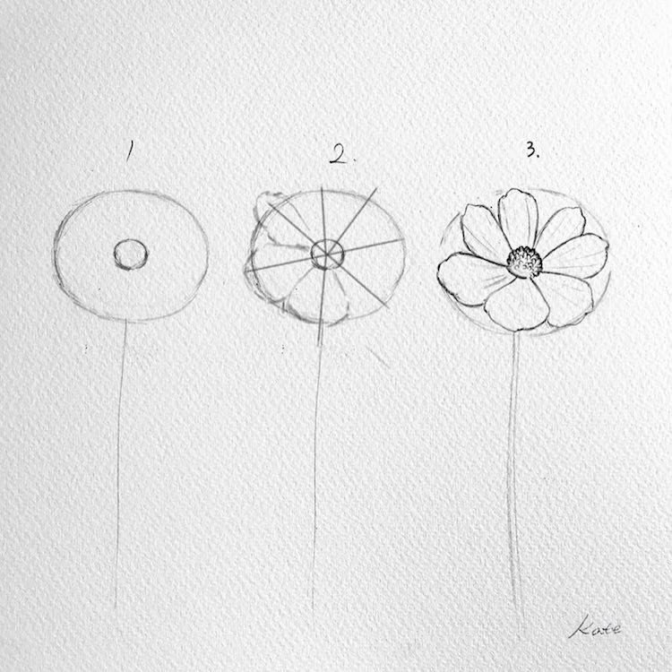 how to draw flowers rose drawing steps beginners at paintingvalleycom how to flowers draw