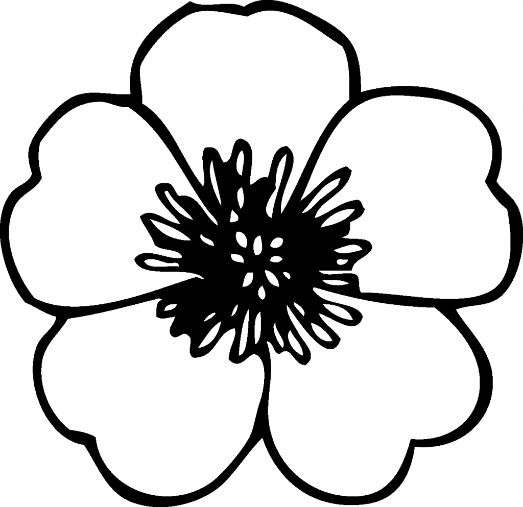 how to draw flowers simple drawing of flowers at getdrawingscom free for flowers to how draw