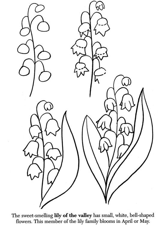 how to draw flowers this easy guide will teach you how to draw a flower how to flowers draw