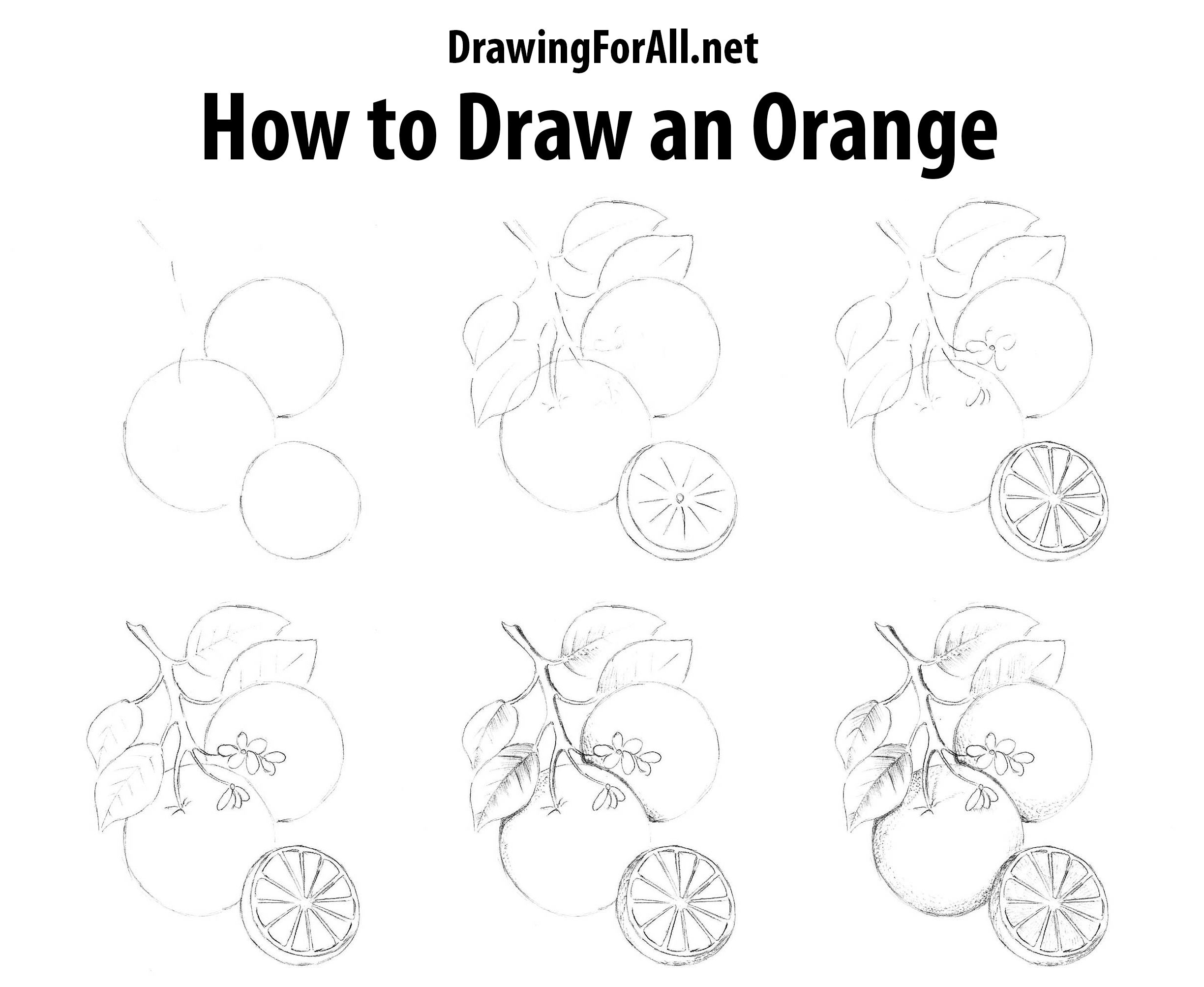 how to draw fruit fruit drawing at getdrawings free download how to draw fruit